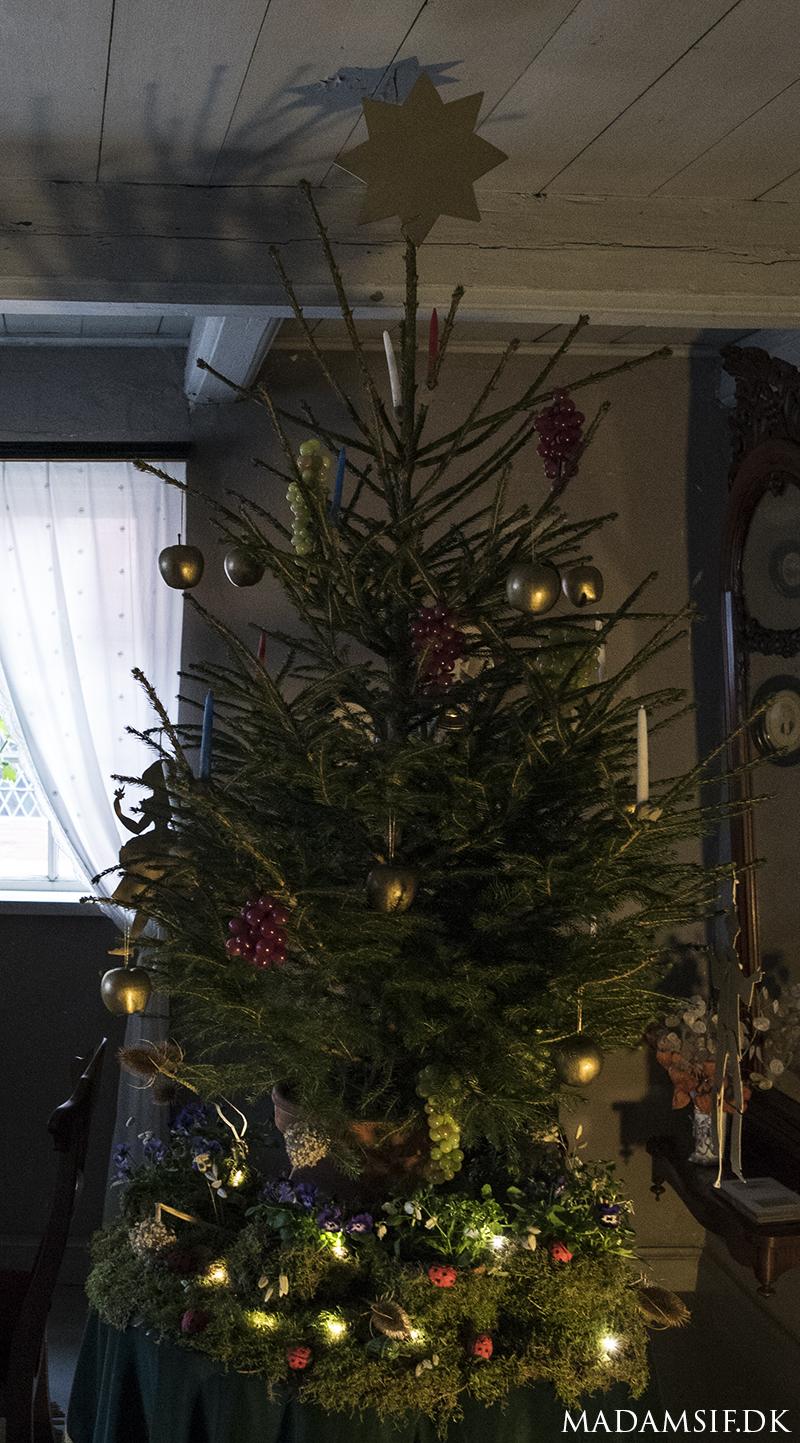 Juletræ fra midten af 1800-tallet, pyntet med vindruer, guldæbler og lys. Taget i Den Gamle By, Århus.