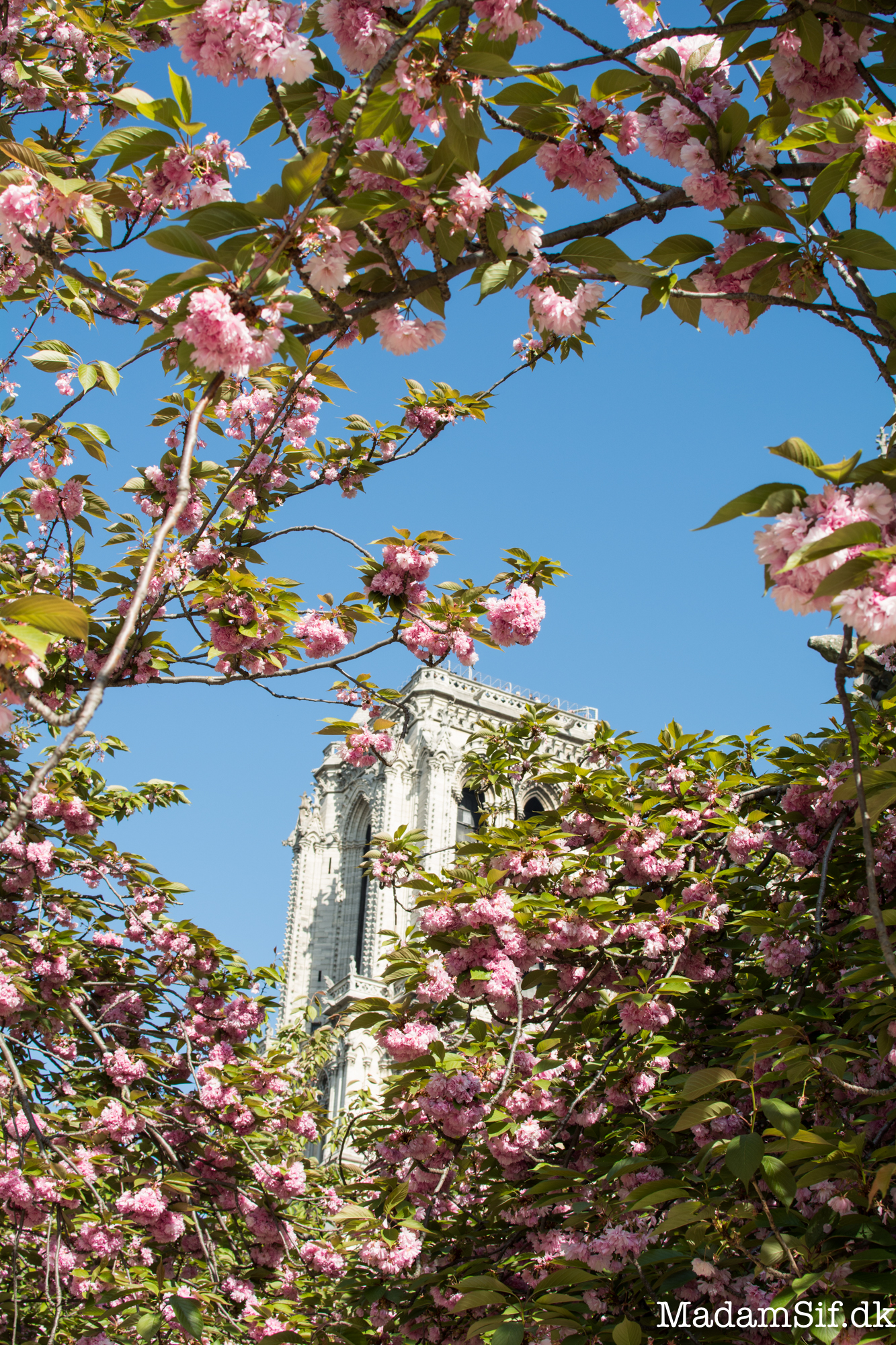 Paris er majet majet smuk om foråret.