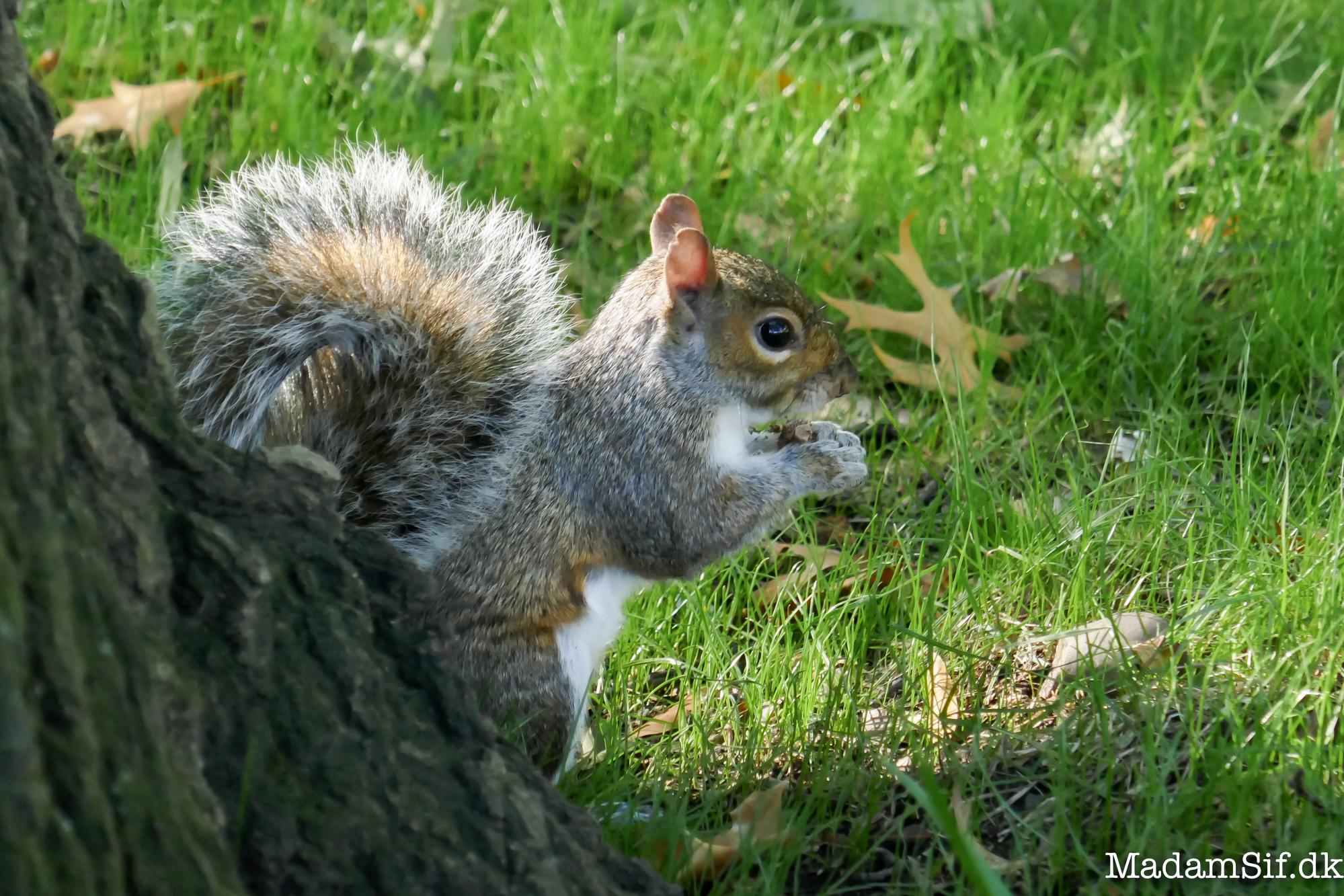 Frokostpause, egernstyle.